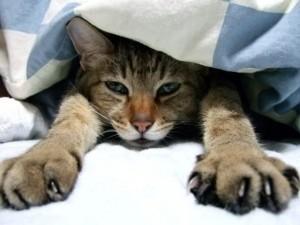 布団から出ない猫
