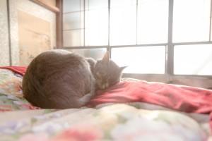 ふとん 睡眠 猫