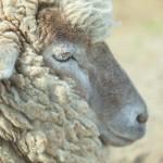 防ダニ加工よりダニが住みにくい羊毛布団