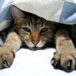 犬や猫も布団で寝たい?ペットの布団選び
